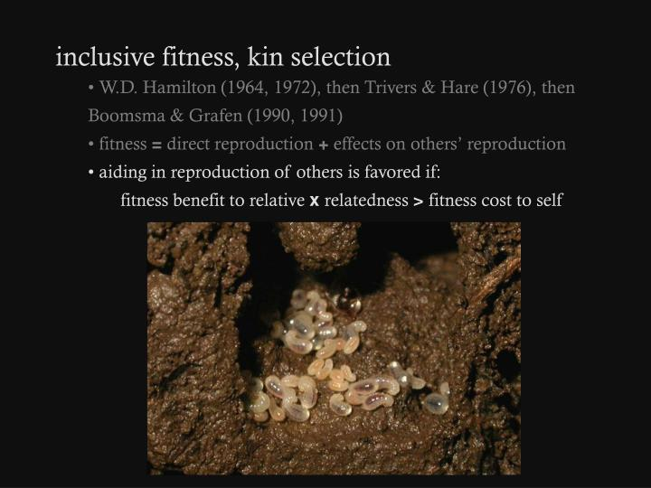 inclusive fitness, kin selection