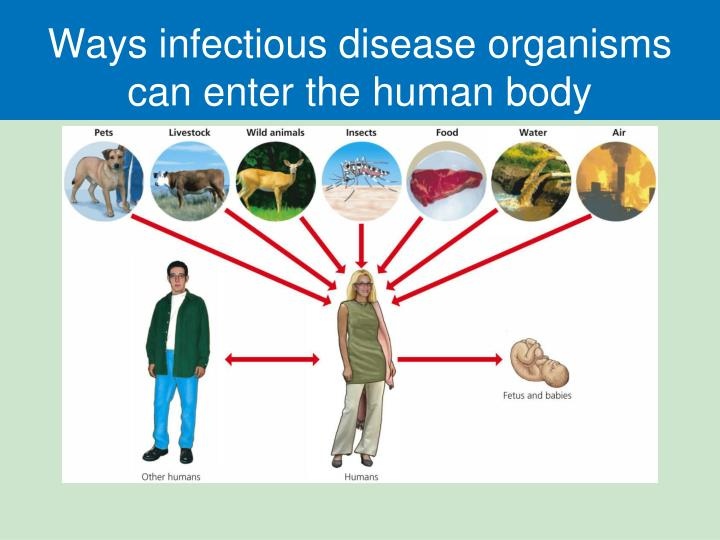 How Do Viruses Enter the body; if they are not contagious ...