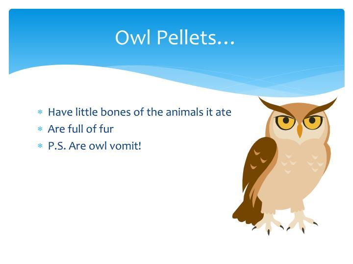 Owl Pellets…