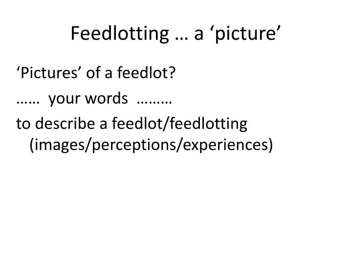 Feedlotting a picture