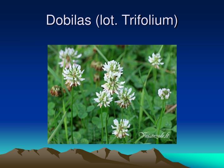 Dobilas (lot. Trifolium)