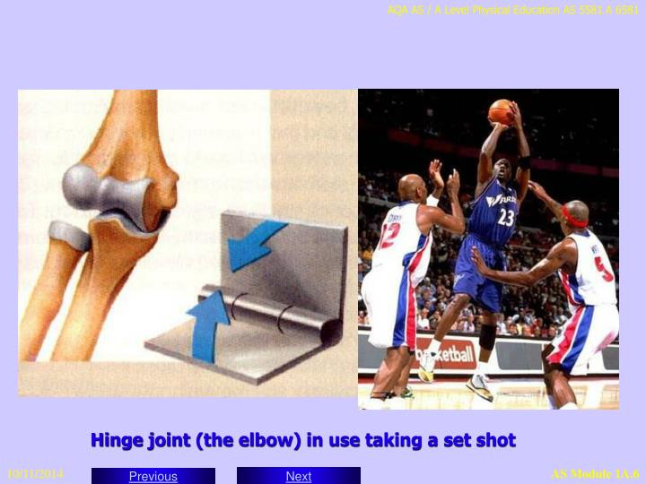Hinge joint (the elbow) in use taking a set shot