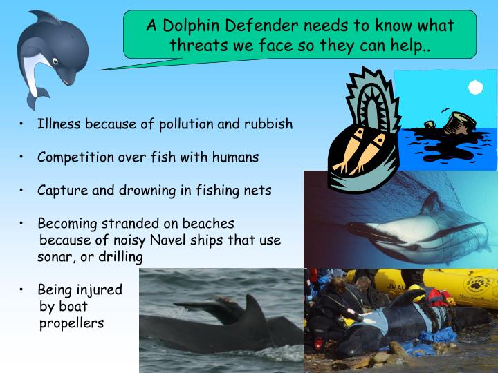 A Dolphin Defender needs to know what threats we face so they can help..