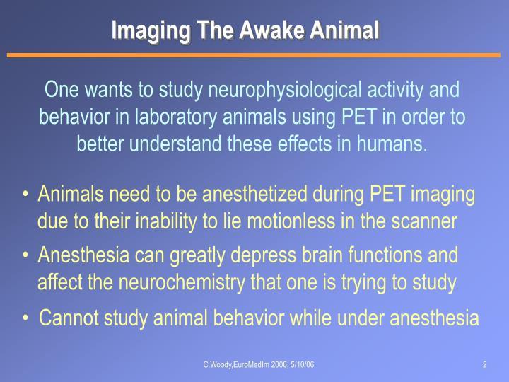Imaging The Awake Animal