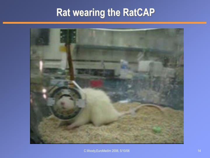 Rat wearing the RatCAP