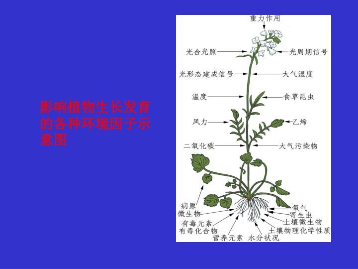 影响植物生长发育的各种环境因子示意图