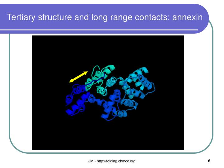 Tertiary structure and long range contacts: annexin