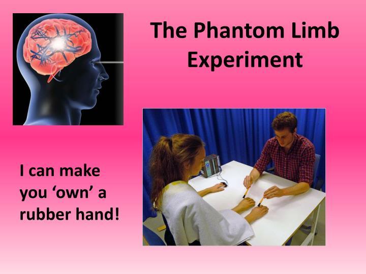 The Phantom Limb Experiment