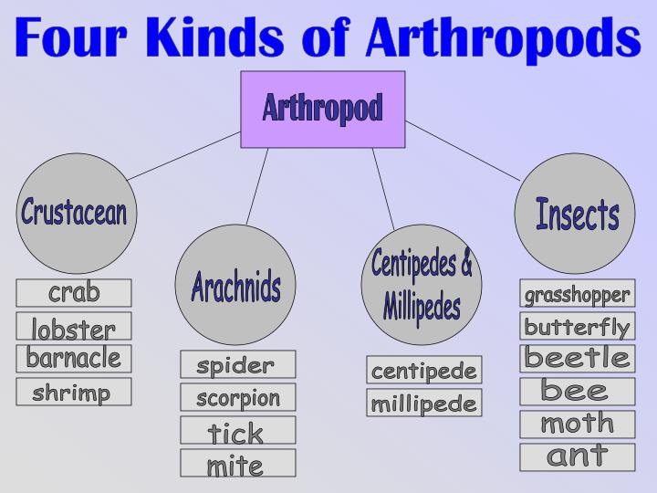 Four Kinds of Arthropods