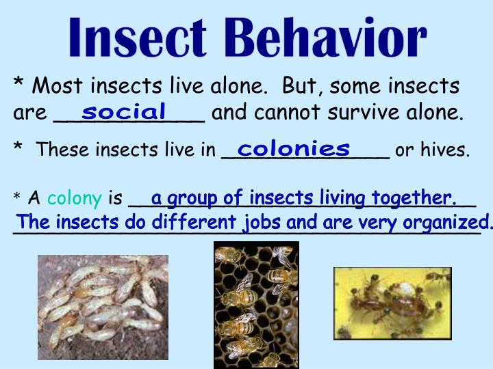 Insect Behavior