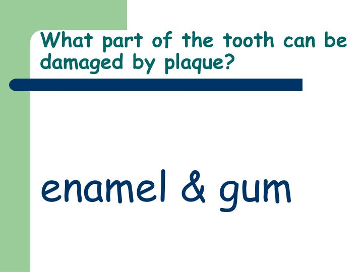 What part of the tooth can be damaged by plaque?