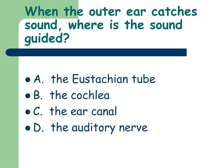 When the outer ear catches sound, where is the sound guided?