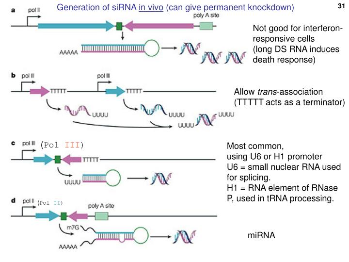 Generation of siRNA