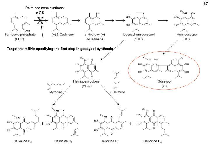 Delta-cadinene synthase