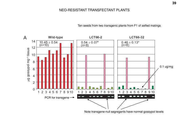 NEO-RESISTANT TRANSFECTANT PLANTS