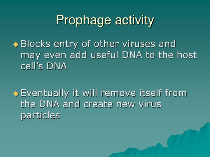 Prophage activity