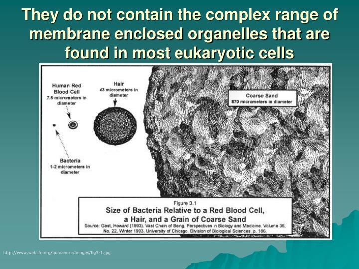 They do not contain the complex range of membrane enclosed organelles that are found in most eukaryotic cells