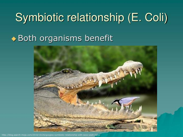 Symbiotic relationship (E. Coli)