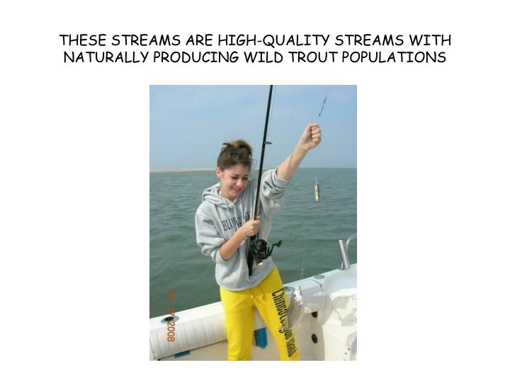 These streams are high quality streams with naturally producing wild trout populations
