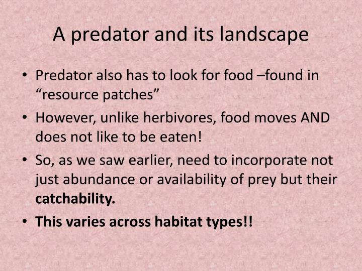 A predator and its landscape