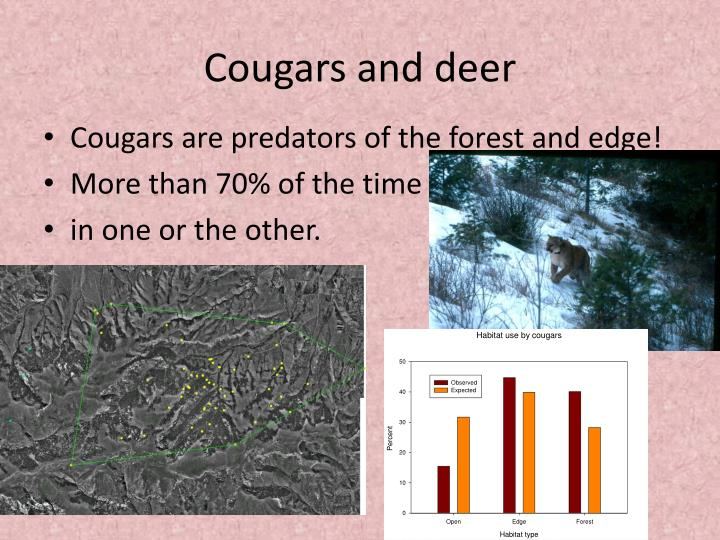 Cougars and deer