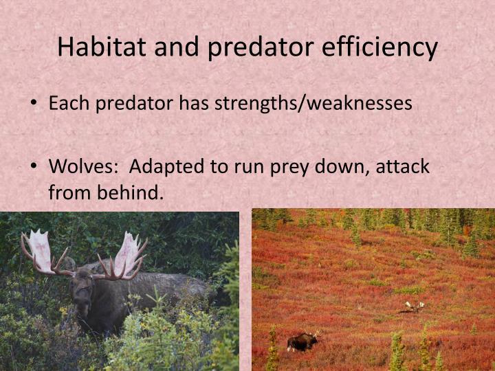 Habitat and predator efficiency