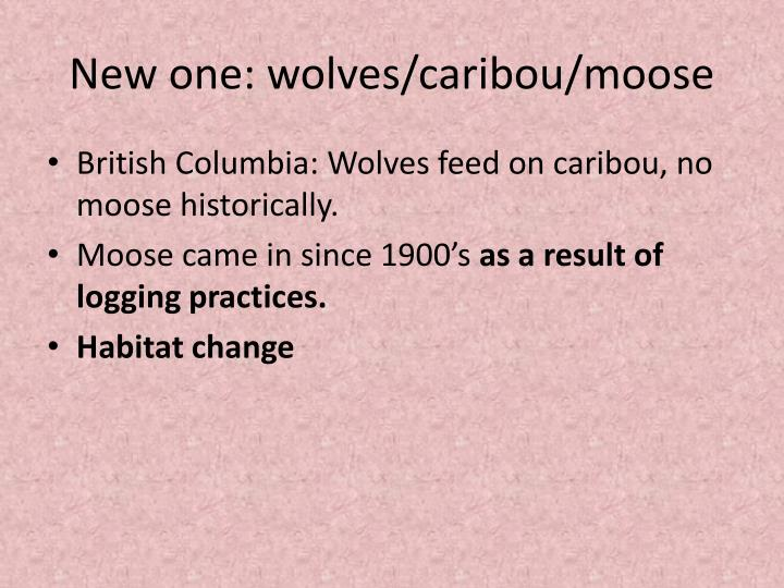 New one: wolves/caribou/moose