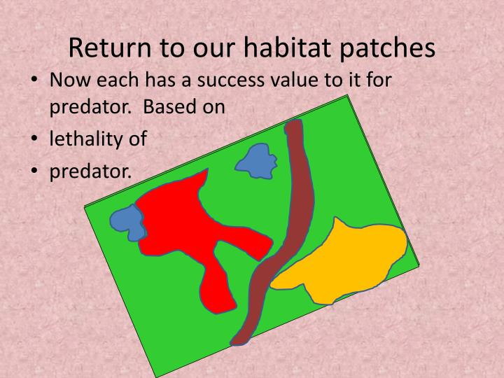 Return to our habitat patches