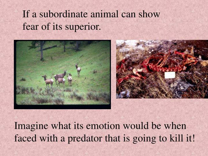 If a subordinate animal can show