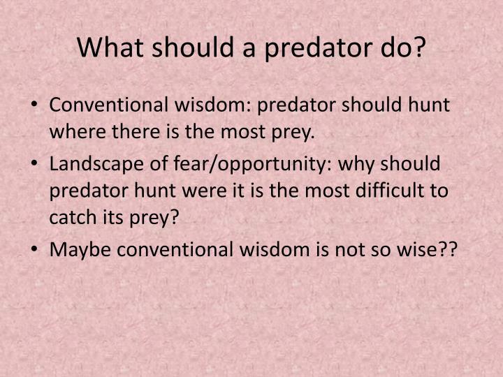 What should a predator do?