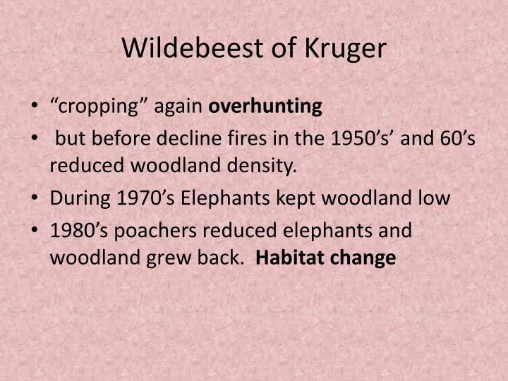 Wildebeest of Kruger