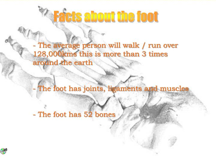 Facts about the foot
