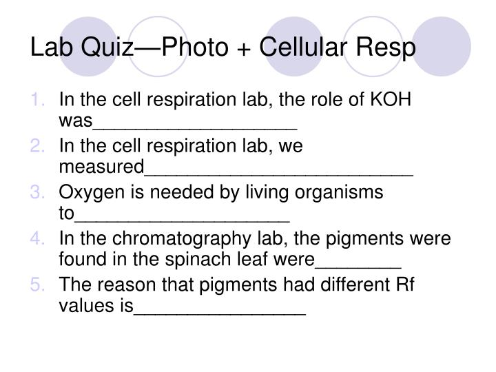 Lab Quiz—Photo + Cellular Resp