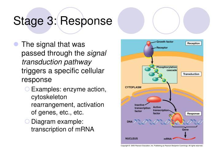Stage 3: Response