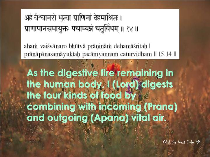 As the digestive fire remaining in the human body, I (Lord) digests the four kinds of food by combining with incoming (Prana) and outgoing (Apana) vital air.