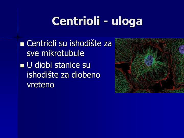 Centrioli - uloga