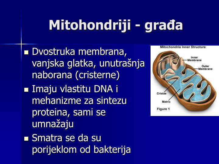 Mitohondriji - građa