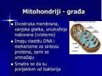 mitohondriji gra a
