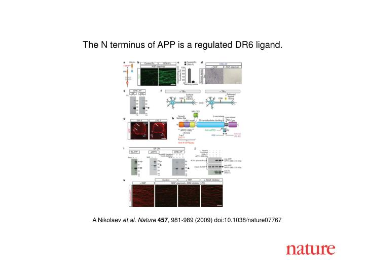 The N terminus of APP is a regulated DR6 ligand.