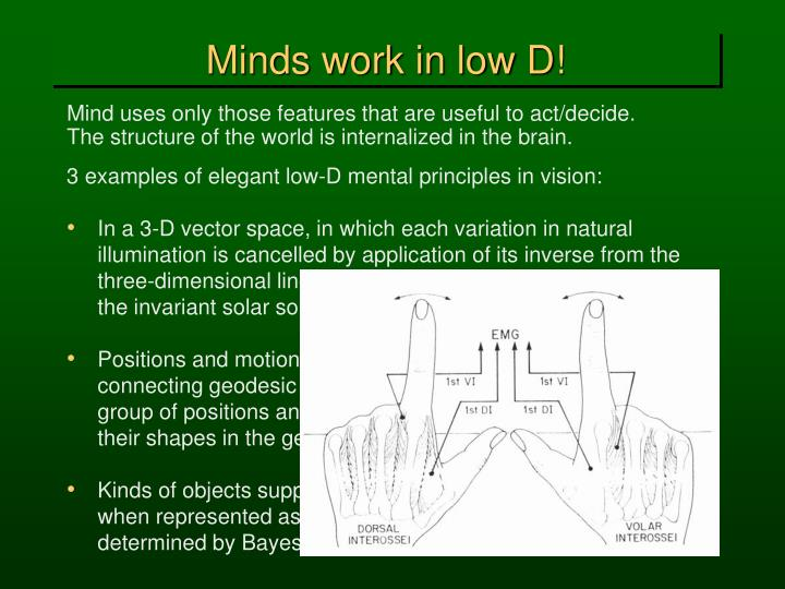 Minds work in low D!