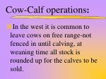 cow calf operations2