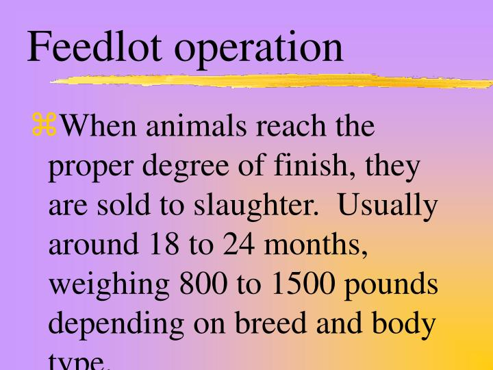 Feedlot operation