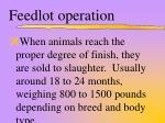feedlot operation1