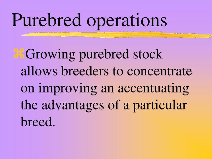 Purebred operations
