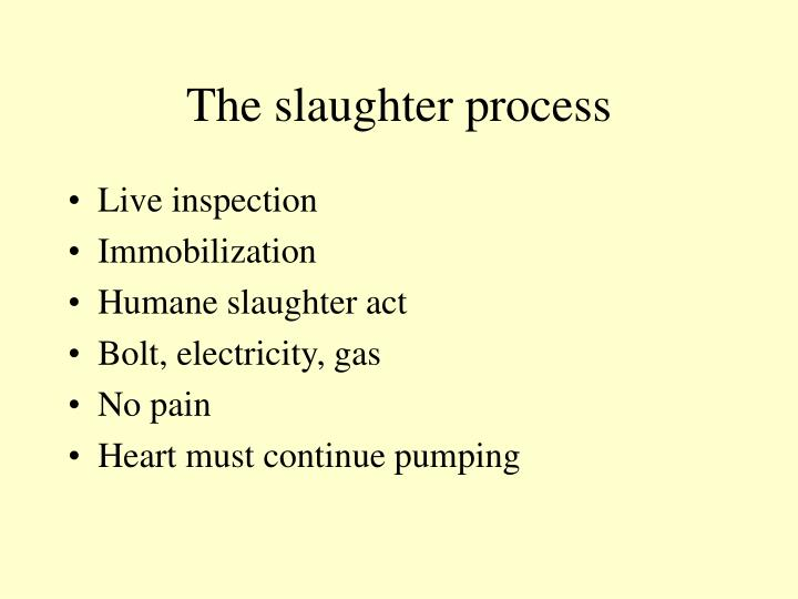 The slaughter process
