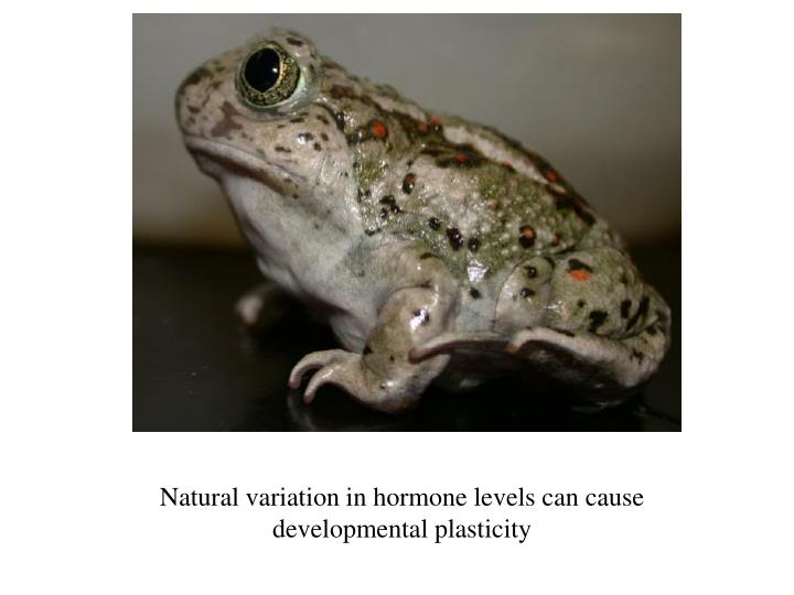 Natural variation in hormone levels can cause developmental plasticity