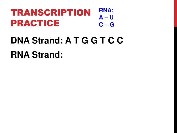 Transcription Practice