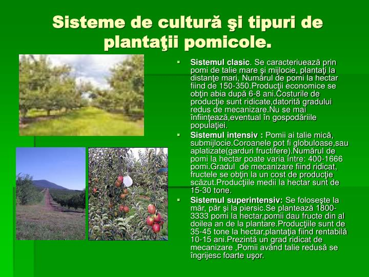Sisteme de cultură şi tipuri de plantaţii pomicole.