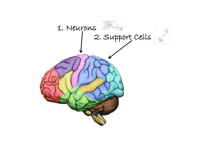 1. Neurons