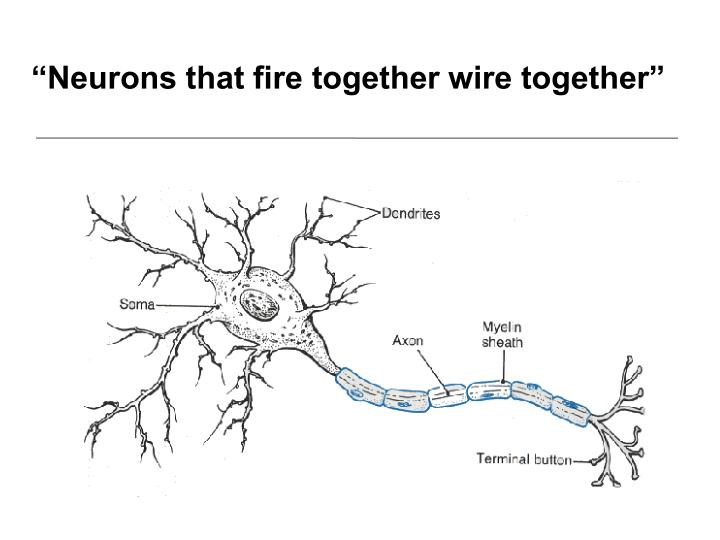 """Neurons that fire together wire together"""